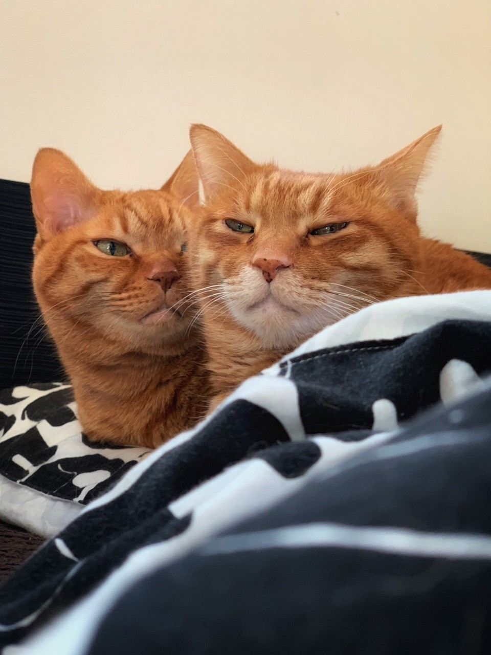 ボクとチビです、朝ママに起されたところです。そろって起きたくなさそう~「ママもどってきて…」くっついて念じている兄弟。ママとネコのこのかけひきは一日続きます。よ