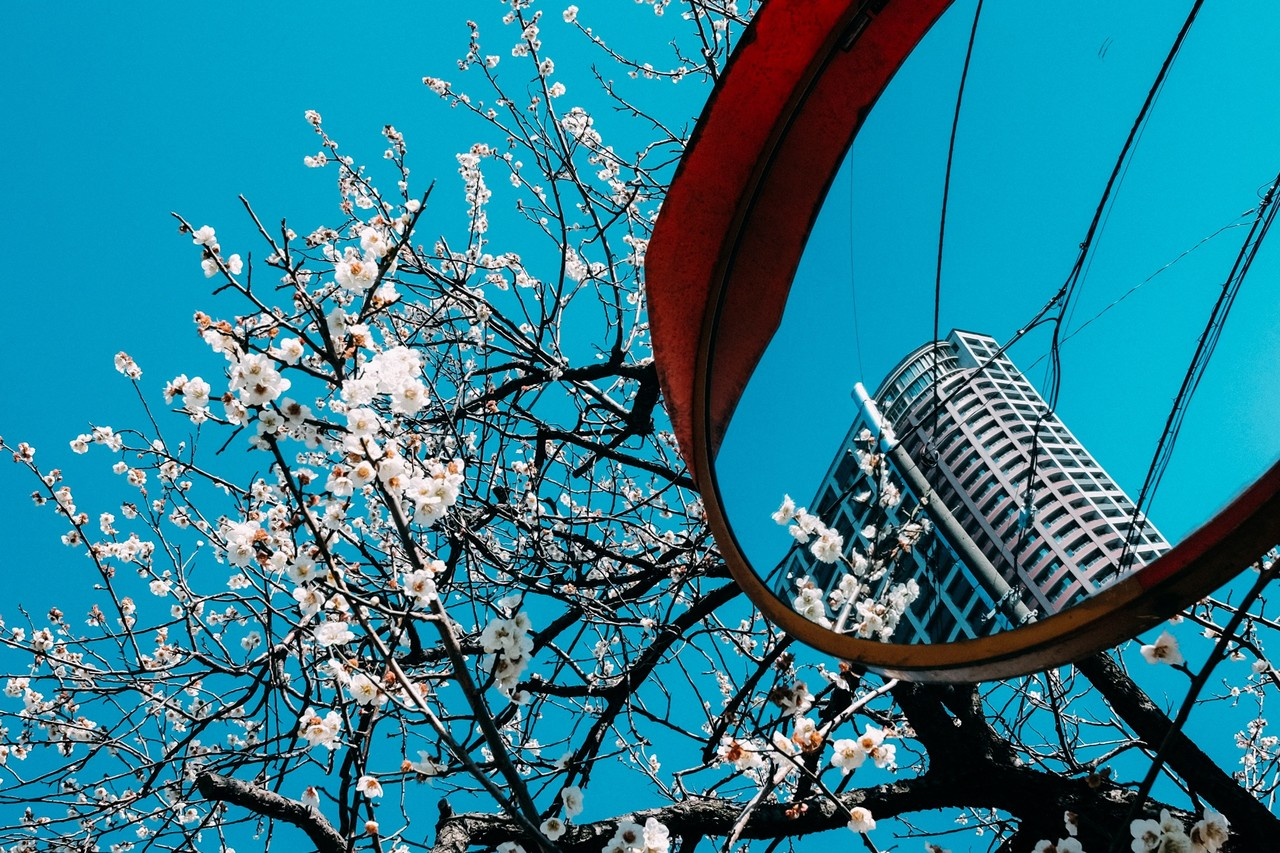 街を歩いているときに見つけた早咲きの桜。