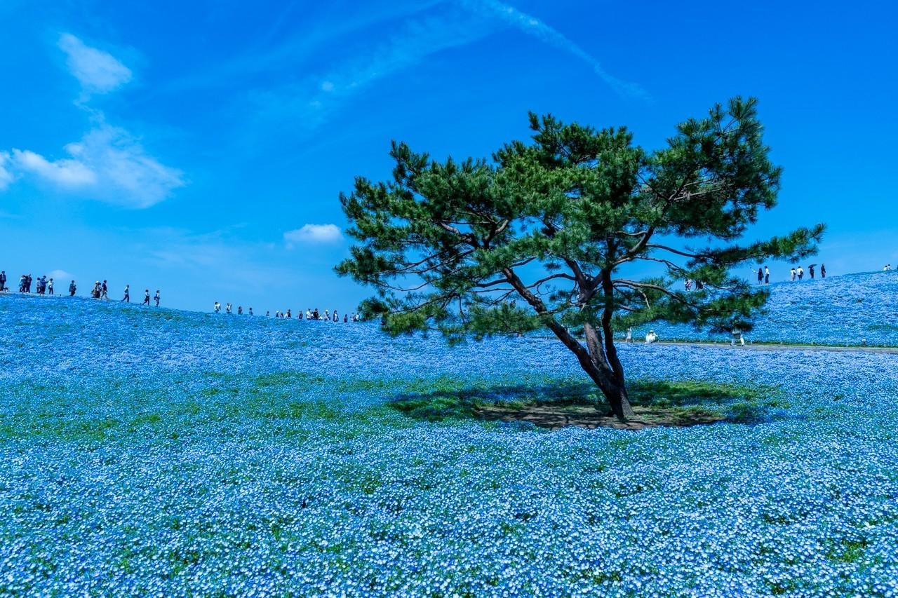 撮影地:国営ひたち海浜公園(茨城県)