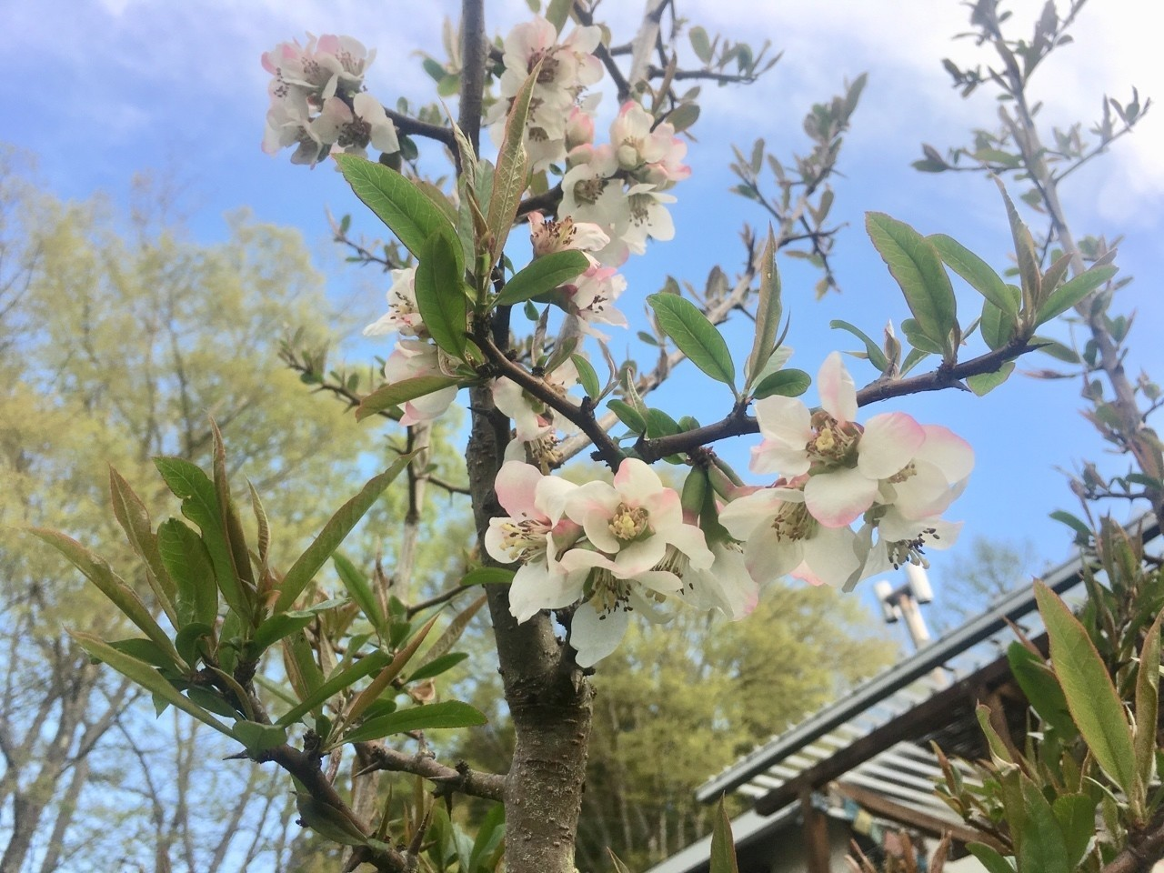 ガーデンは花盛り|shanthi-usui...