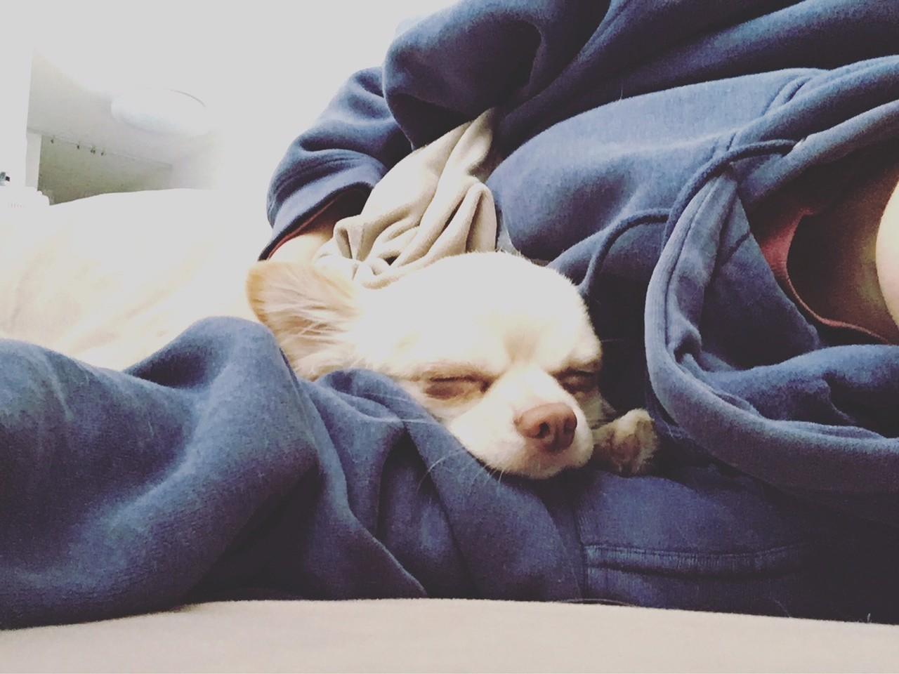 犬 腕の中で寝る