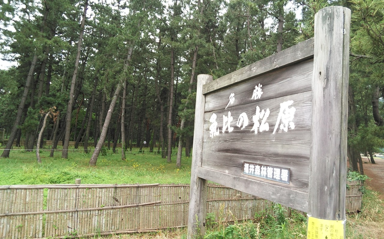 #気比の松原 #福井