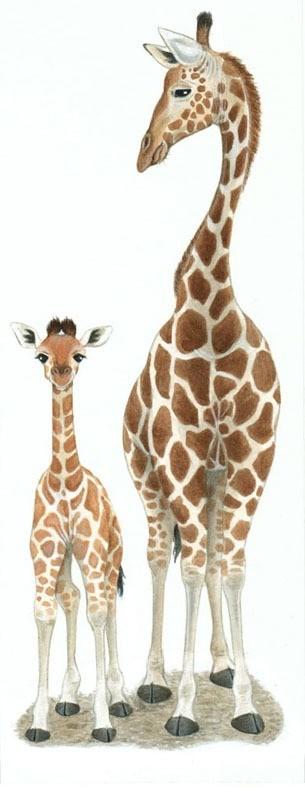 6月21日は世界キリンの日、Happy World Giraffe Day!