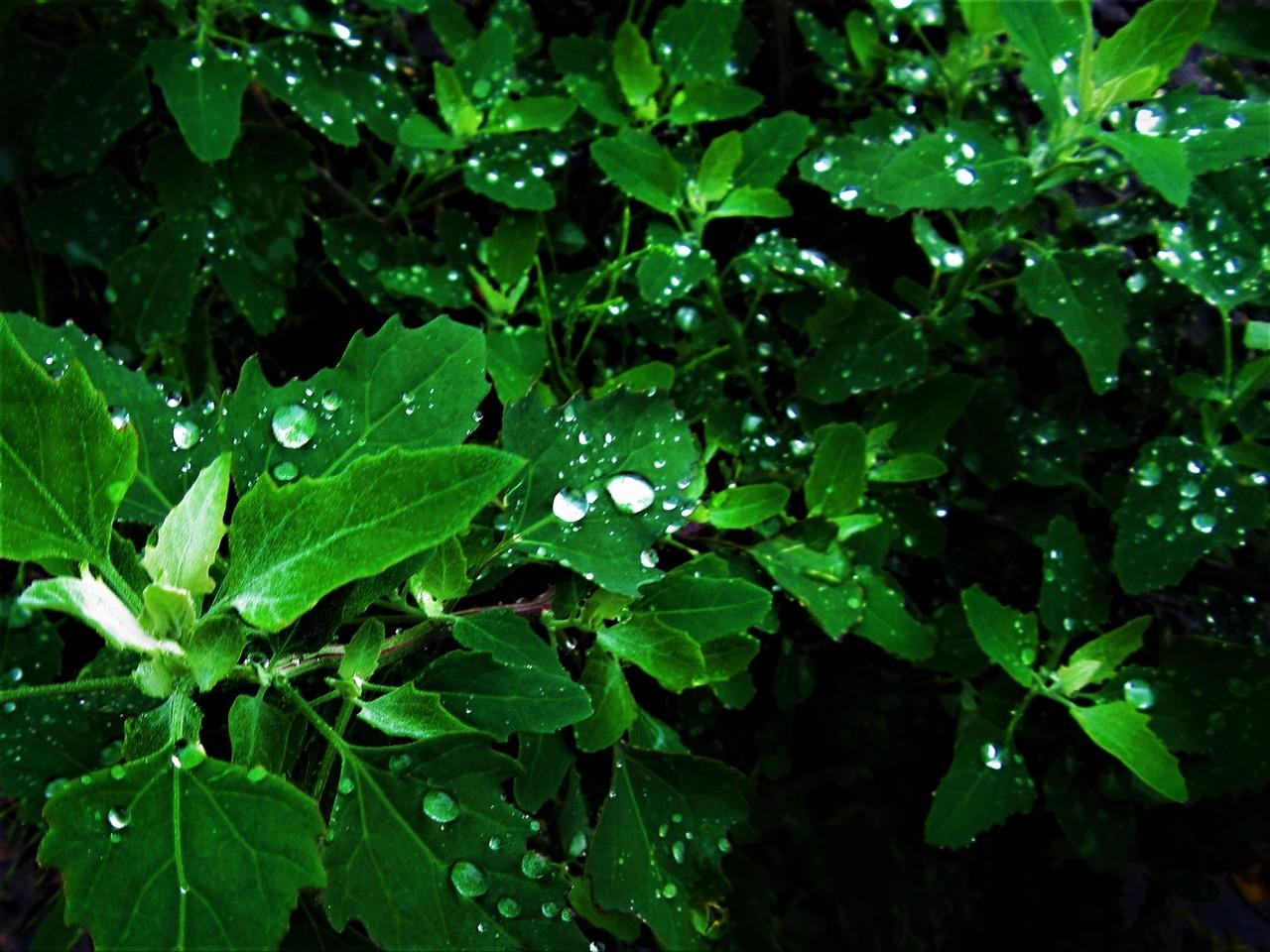 僕が勝手につけた名前。それは美しい水滴ホタル。輝きながら微笑みながら、やがてどこかへ消えてゆく。