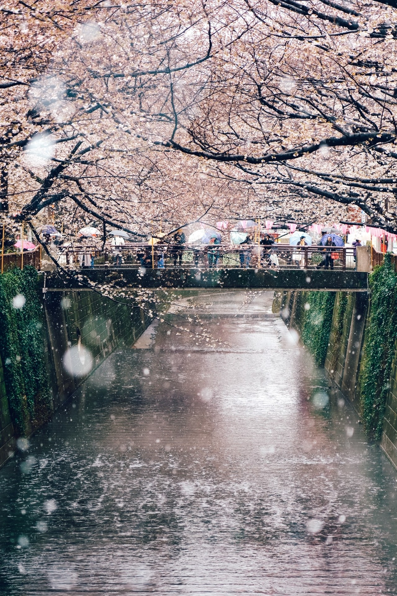 105mm f4 / 雪をぼかして撮る目黒川と桜