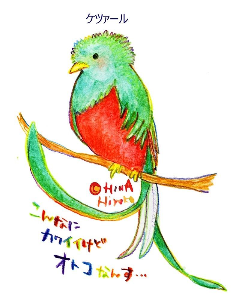 世界一美しい鳥を見に行く旅。|陽菜ひよ子 / イラストレーター
