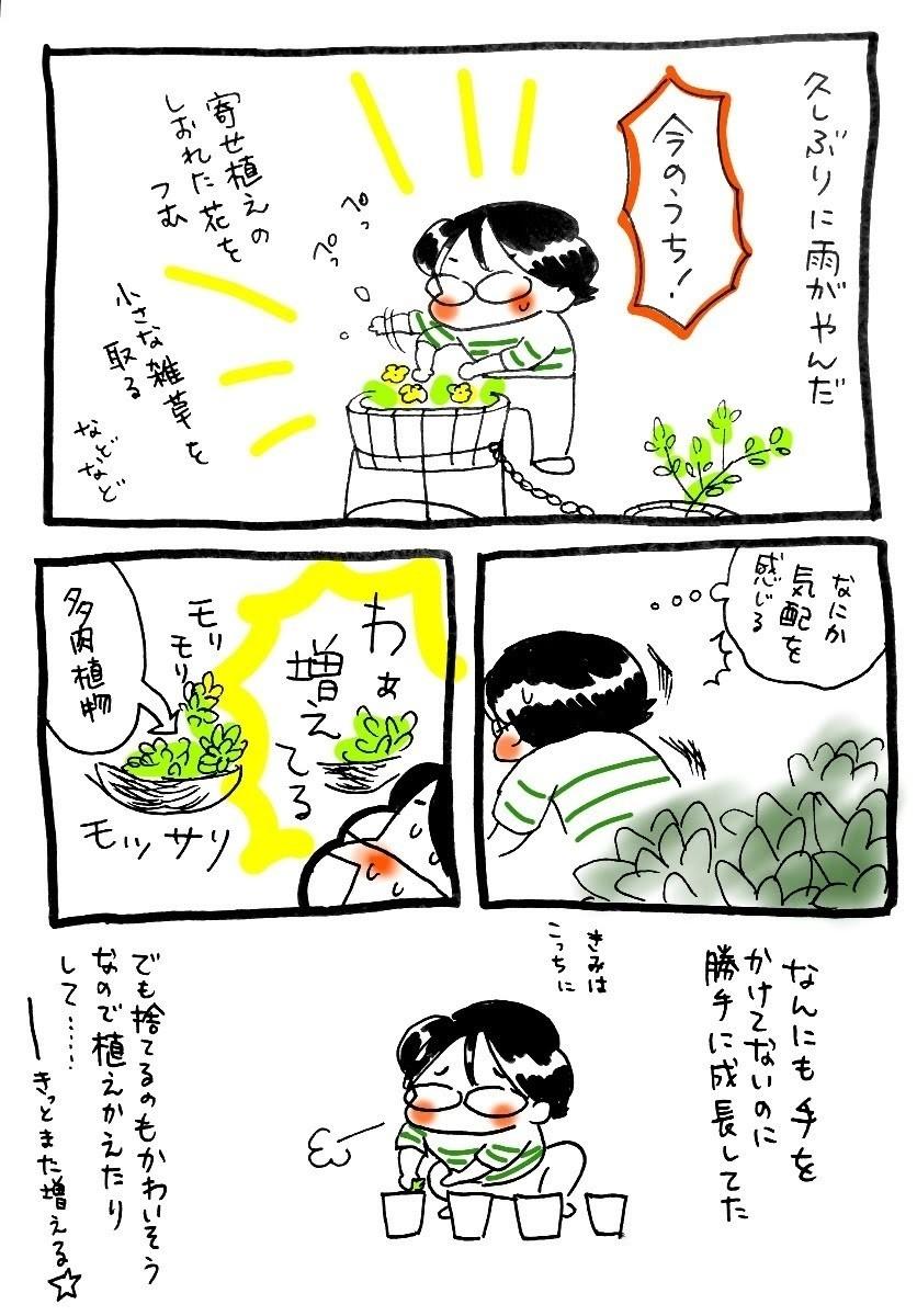 もともとは長女ぴよこがハマってた多肉植物なのですが、テキトーに水だけやってたら増えました😑
