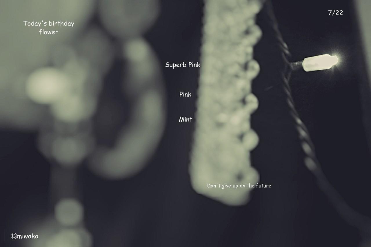 #撫子 # なでしこ #Superb Pink #思慕 #Pink #純粋な愛 #ミント #西洋薄荷 #せいようはっか #Mint #有徳の人 #誕生花 #7月22日 #birthday  #おめでとう #Flower #和風月名  #7月 #文月 #七夕月 #七夜月 #愛逢月 #秋初月 #女郎花月 #親月 #相月 #蘭月 #photo Don't give up on the future