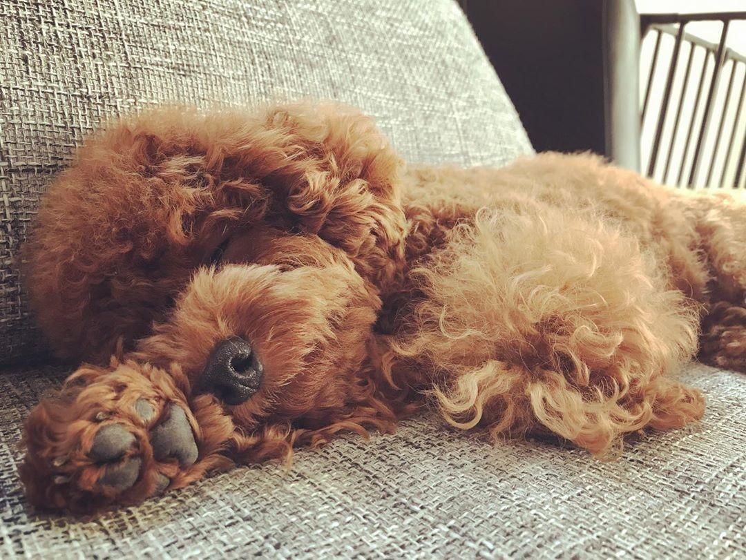 フガッ 愛犬の無防備な寝相を集めてみた いい部屋ペット いい部屋
