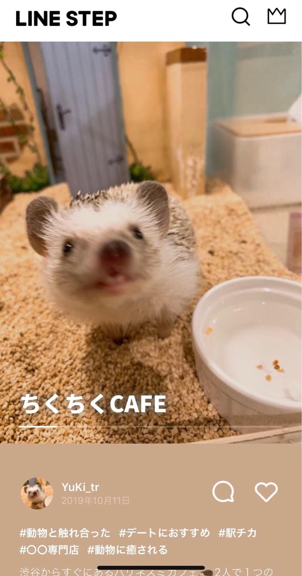 可愛い 癒し 都内で絶対おさえたい動物カフェ5選 今週のおすすめstep