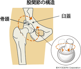 股関節の転がり運動と骨盤|北川 雄介/身体能力開発専門家|note