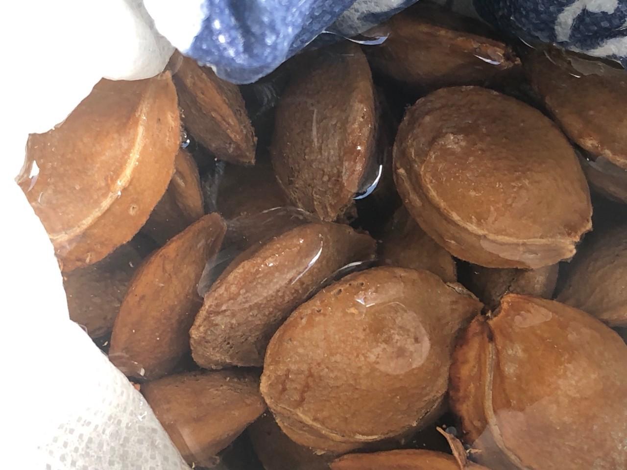 杏の種の利用法