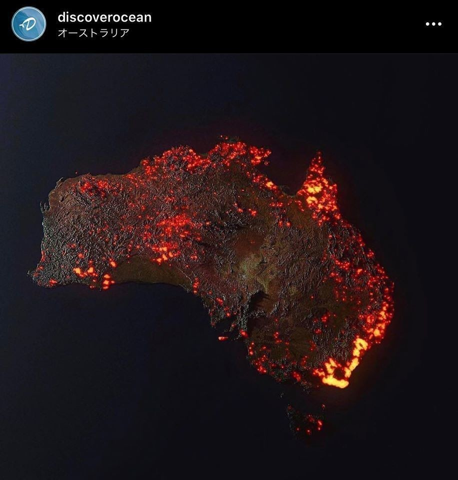 オーストラリア コアラ 火災