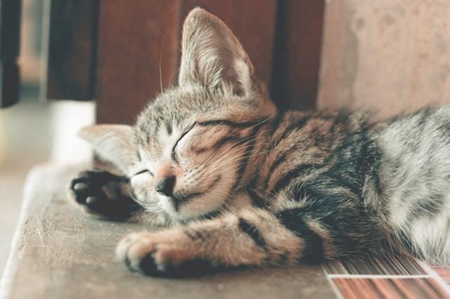 自宅待機 stayathome corona cat