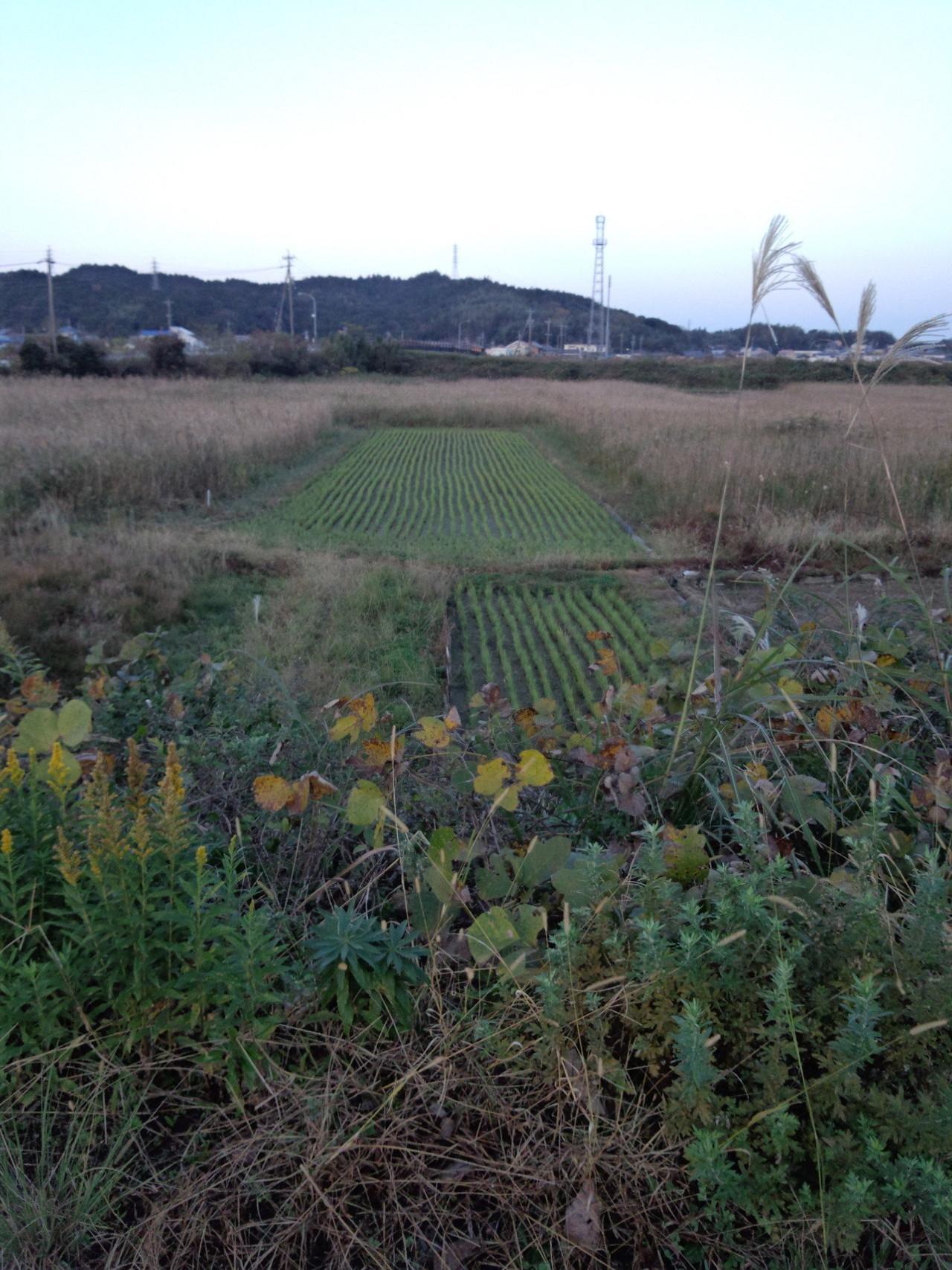 耕作放棄地は動物の楽園|Yuki|...