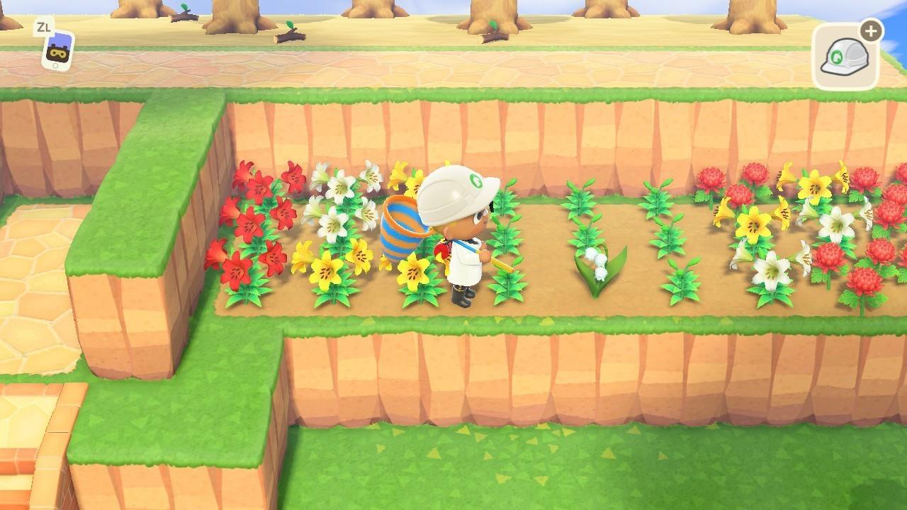 森 場所 あつ すずらん 咲く
