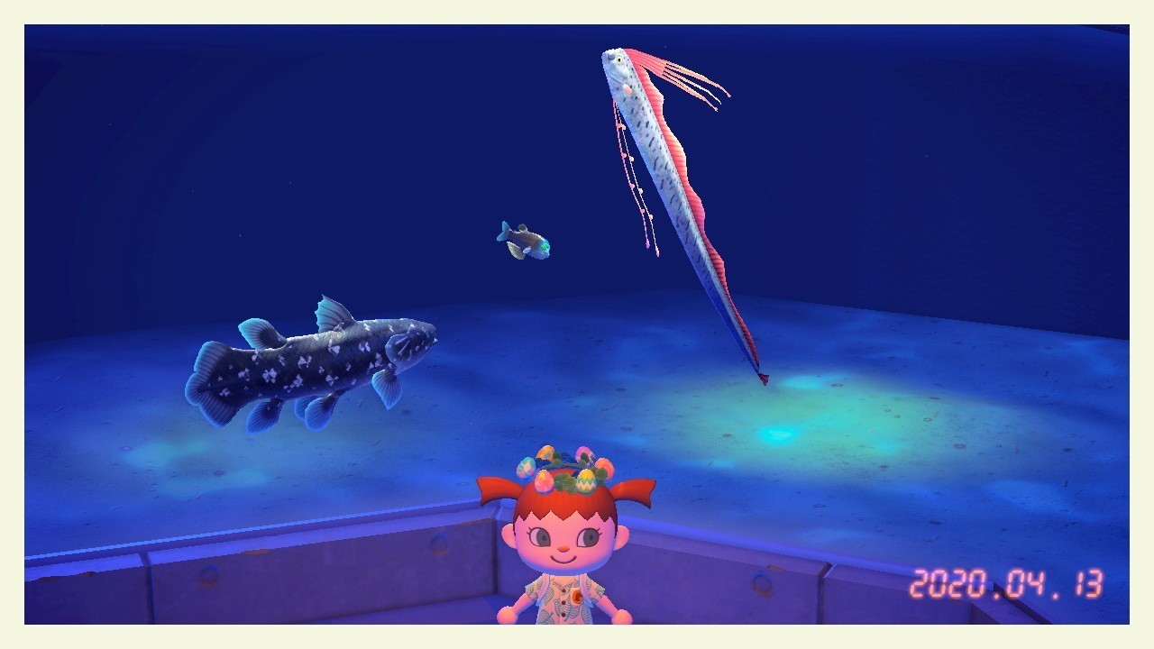 森 番 高い 魚 あつ 一
