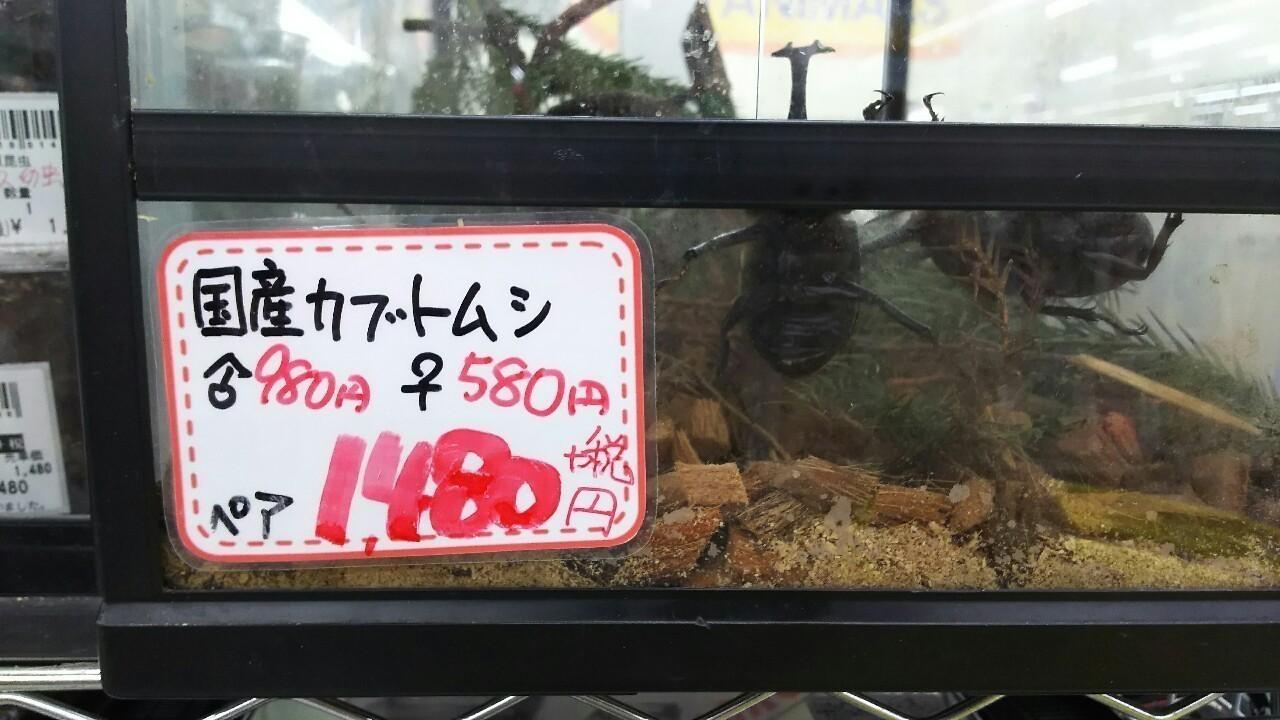 カブトムシの飼育方法