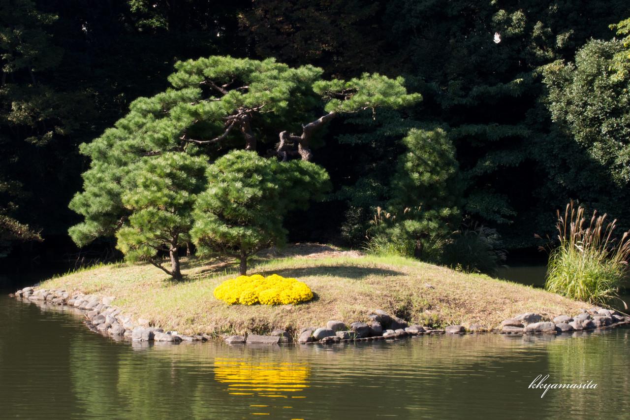 11月初旬から中旬まで、新宿御苑でおこなわれる菊花壇展