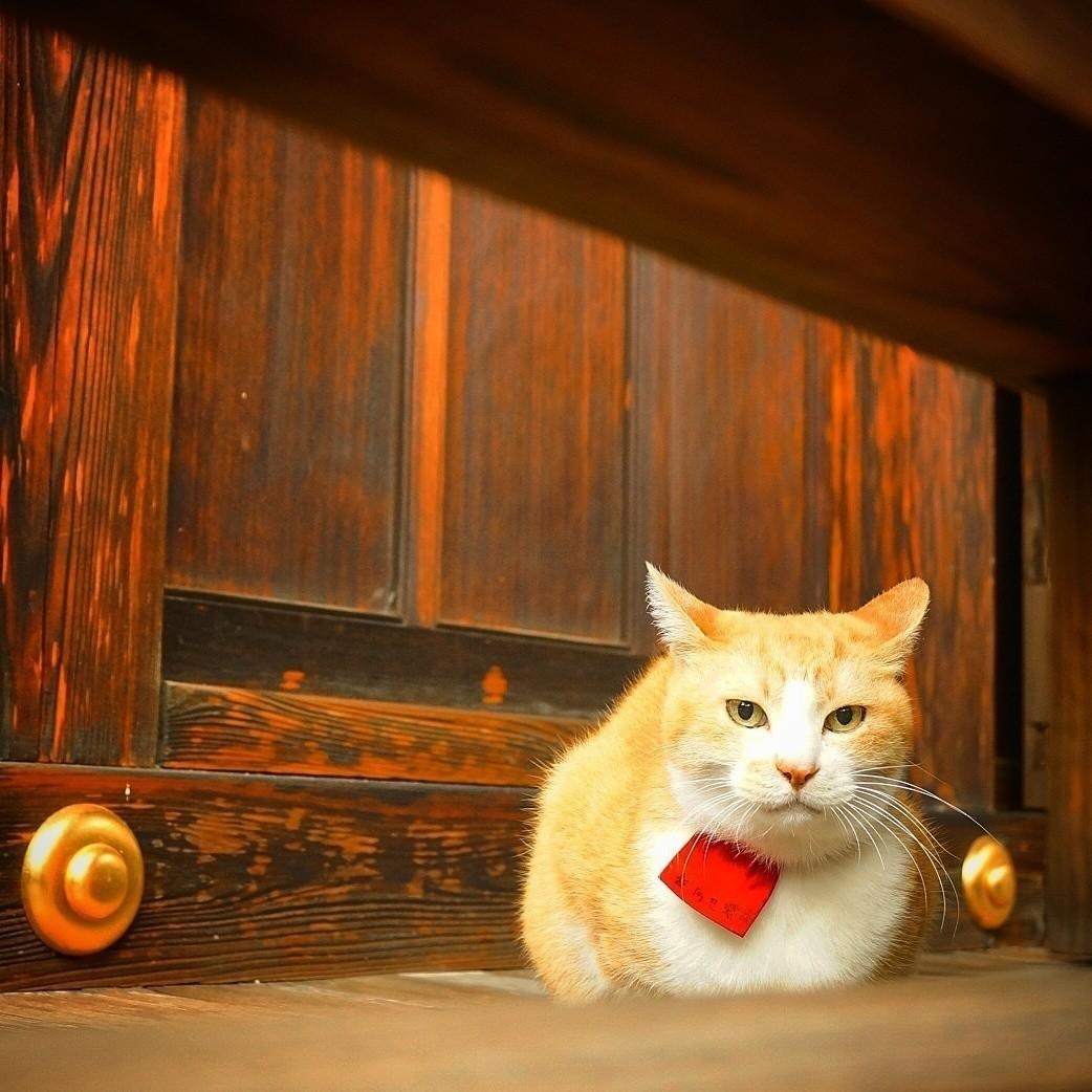 日本の古いモノがスキでよく京都へ行く。 お城や寺社仏閣に行くとよく猫会う。 猫がいる場所はイゴコチがよい。