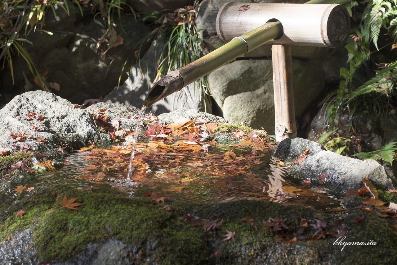 新緑の季節と紅葉の季節に訪れると心がなごむ場所、殿ヶ谷戸庭園。