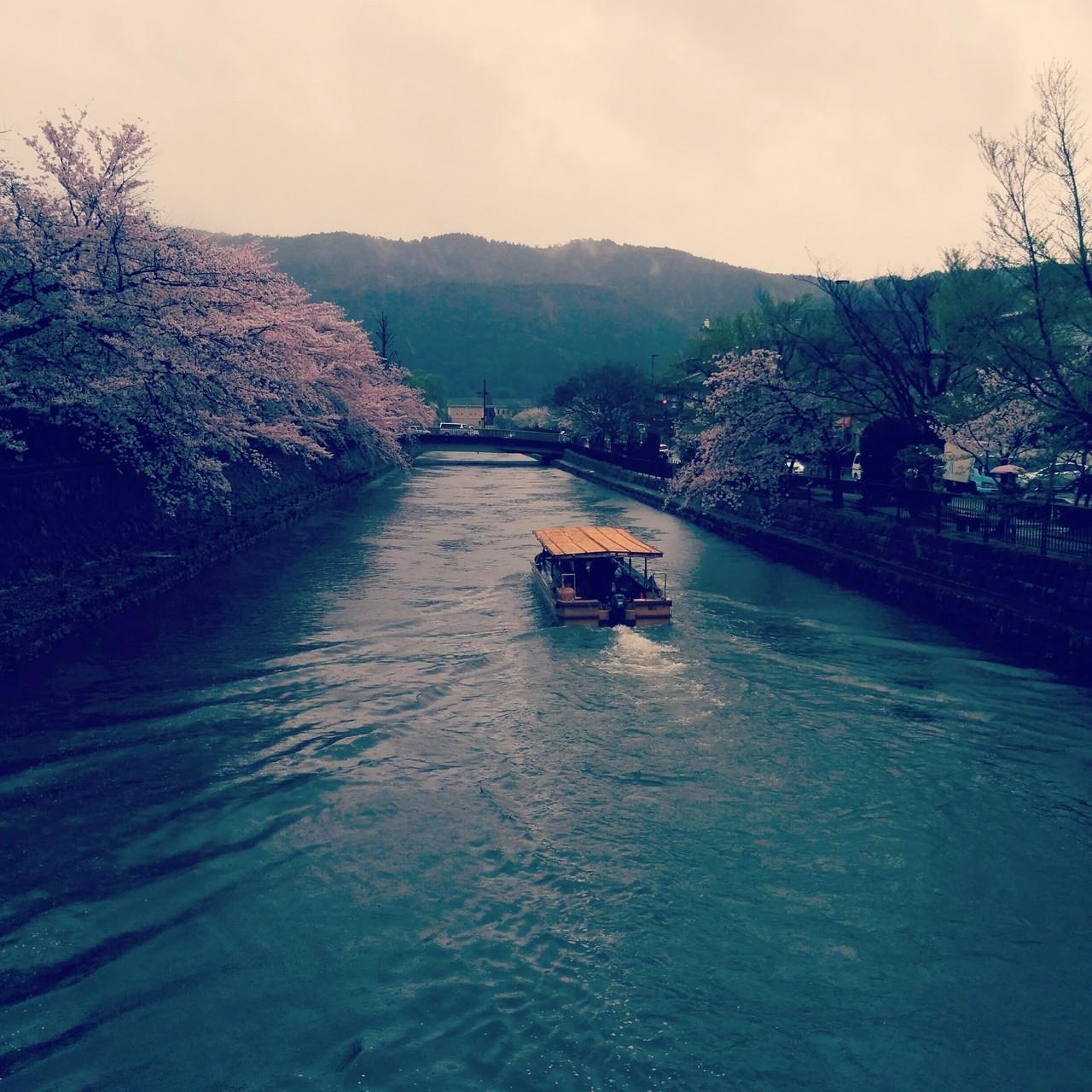 図書館の帰り道 美術館そばに立つ桜は、雨の中でも美しく バスを待ちながら舟を見送る