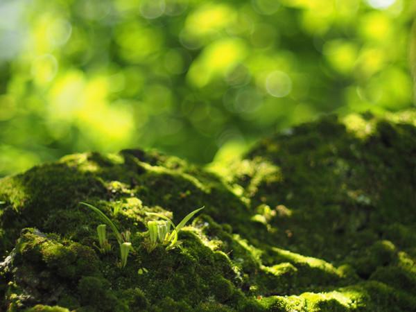 翠おちる樹皮を覆う緑より芽生えし命もまた碧