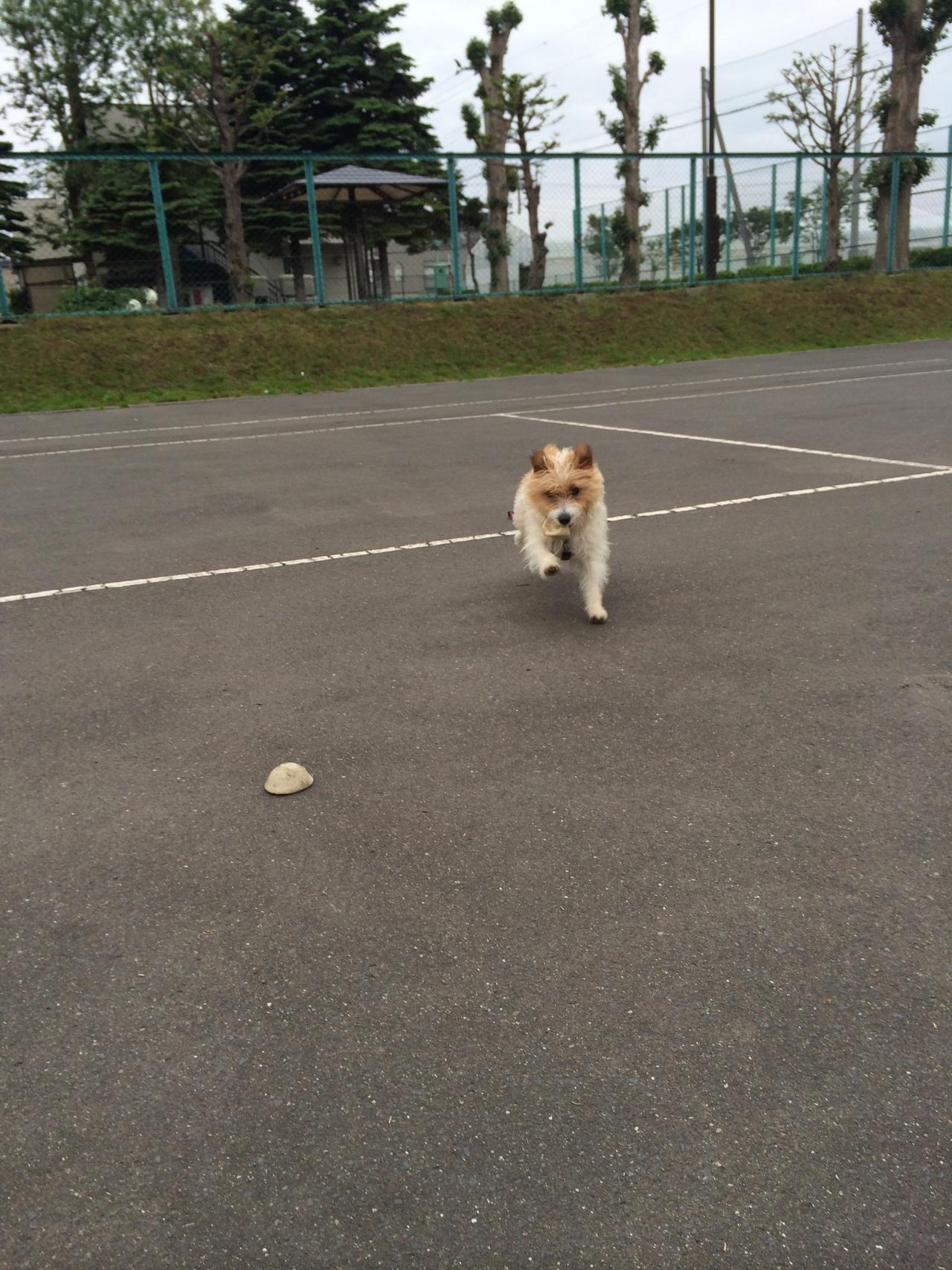 人間が捨てた壊れたテニスボール