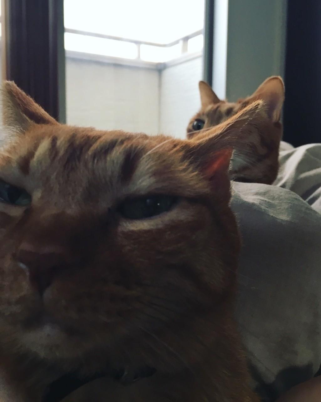 ママがおきようとしてもネコはまだねむねむ。ふたりに布団を押さえつけられて引き止められ状態のママ。