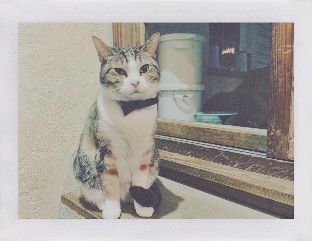 不満顔。 なぜ不満なのかはインスタに書いたので割愛(https://instagram.com/p/BfVrWtRA0N5/)#ねこ #猫 #写真