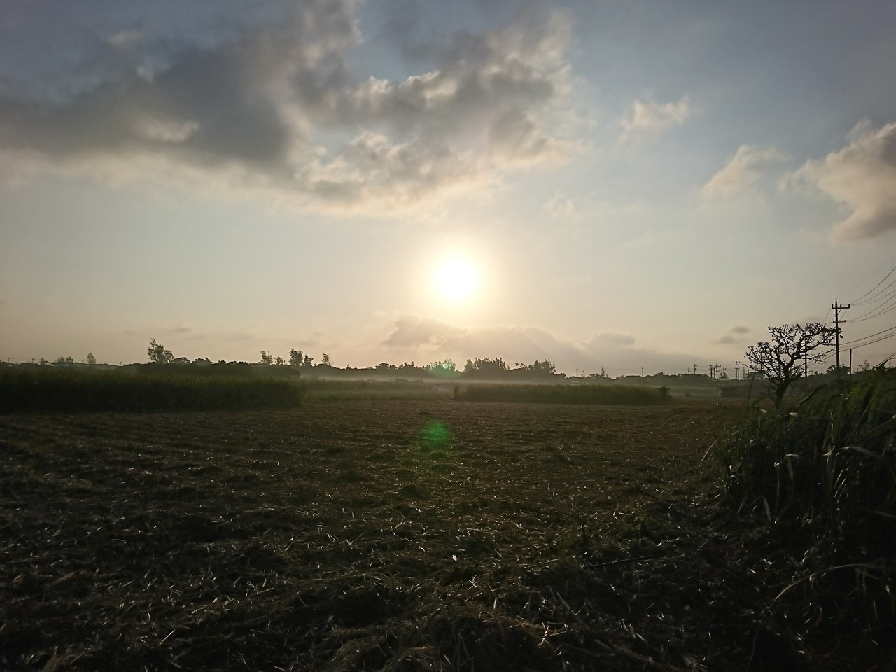 今朝の畑道。 明け方に降ったらしい雨が、朝日を浴びて霧になって燃えていた。 画像では伝えきれなくてすまん!