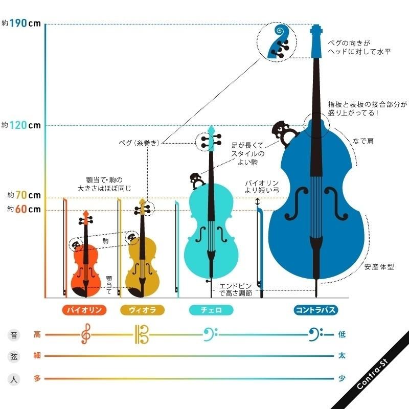 オーケストラの弦楽器の見分け方大きさ編aoyamananote