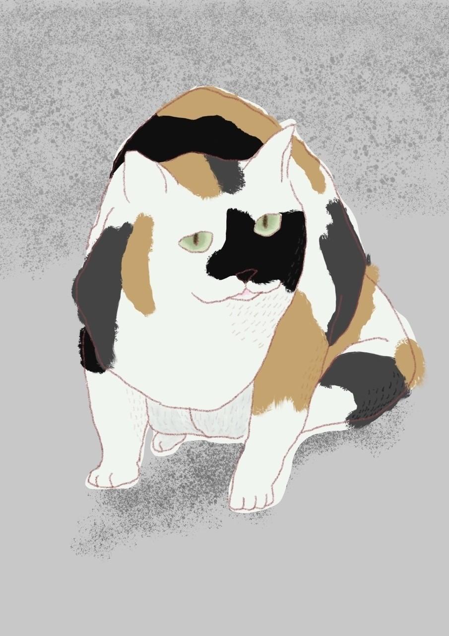 #イラスト #猫 #illustration #cats #procreate