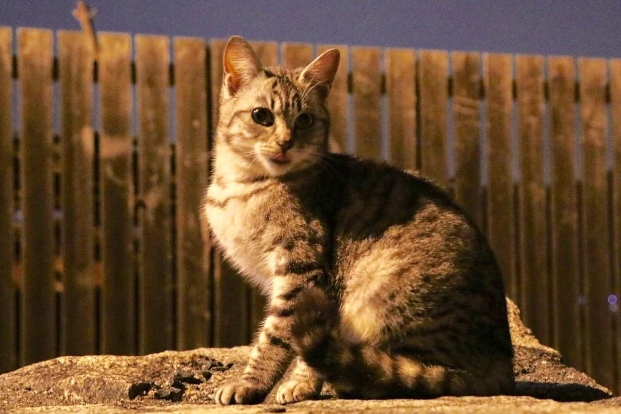 夕闇に佇む猫を見ていると..  #写真 #風景 #猫