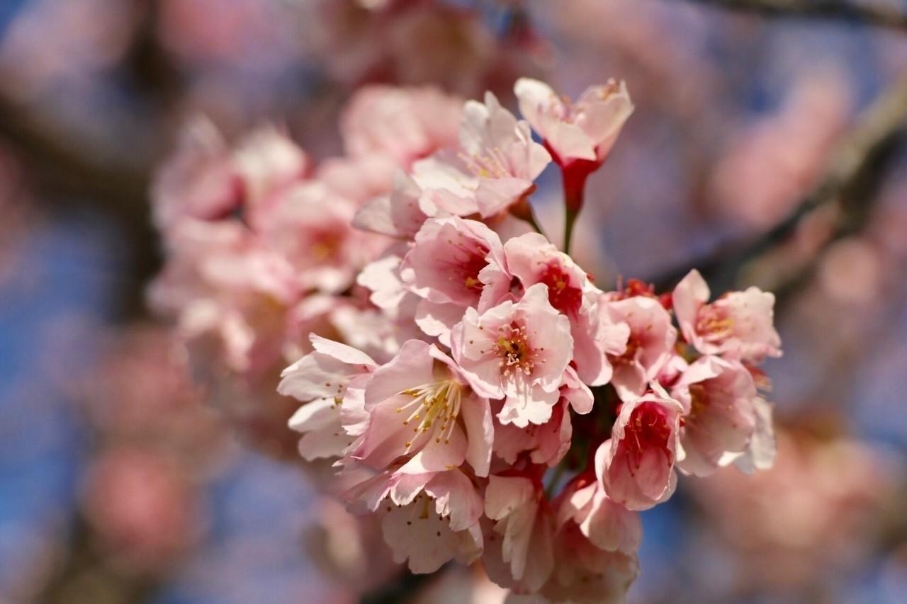 春の訪れ #カメラ #写真 #桜