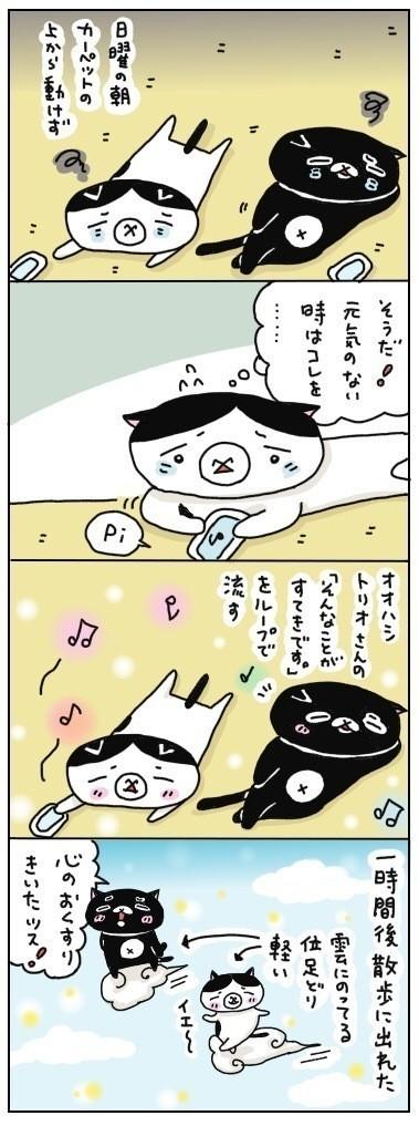 大橋トリオさんの「そんなことがすてきです。」という曲は、我々猫夫婦にとって心のお薬です。  元気がない時にこの曲を聴くと、少しずつ体や心が動くようになってくる感じ。  黒猫は、頭痛の時にこの曲を聞いたら治ったそうです☀