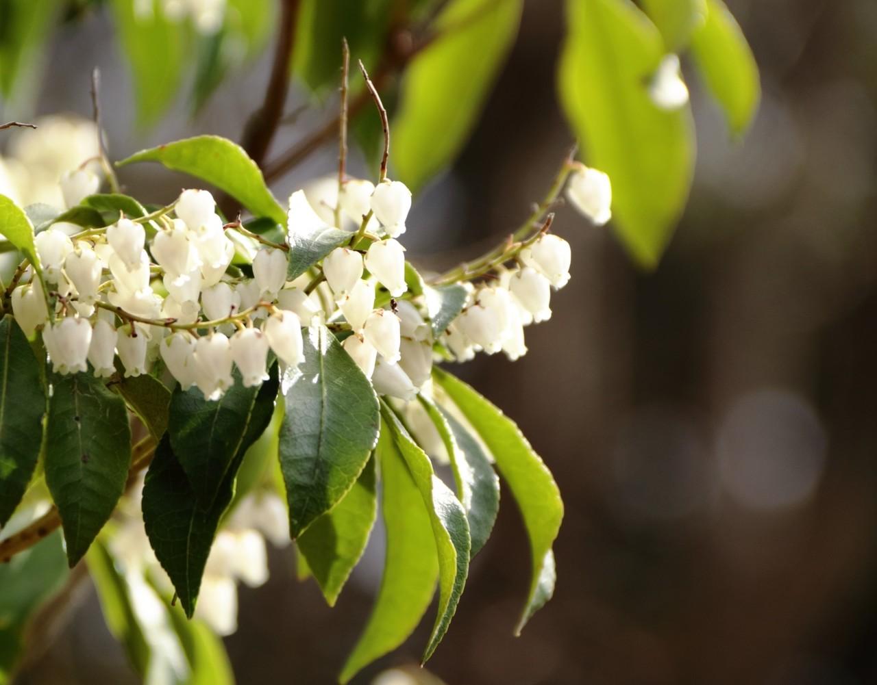 春の光をあびて、屈託なく笑っていて。目の前でも。記憶のなかでも。