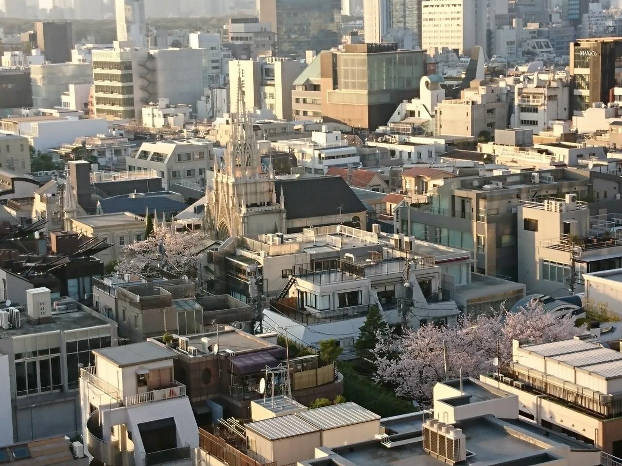 夕暮れのライトアップ始めの大聖堂⛪と桜🌸