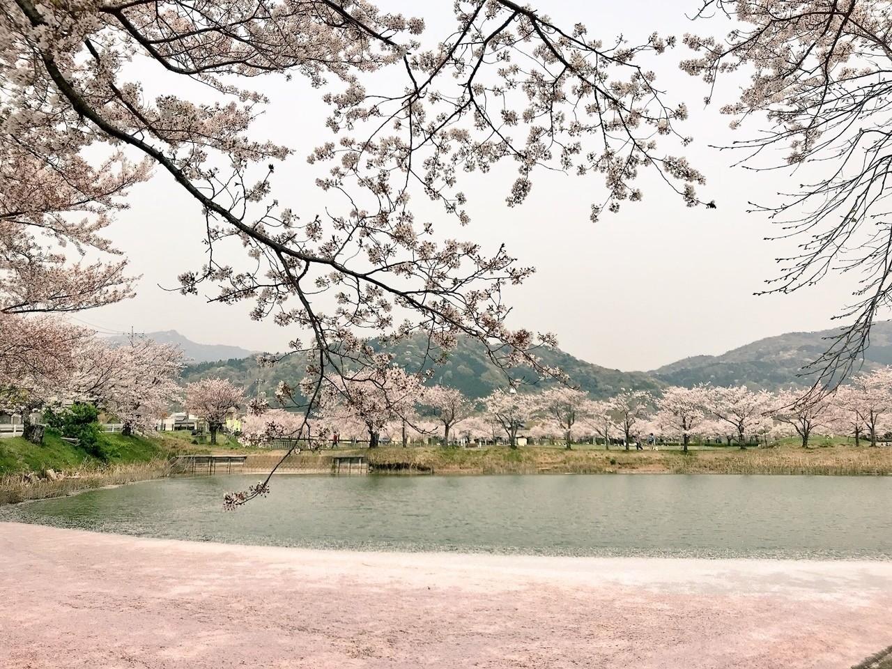 詰め込めるだけ詰め込んでみた #写真 のあつまり #茨城 #春