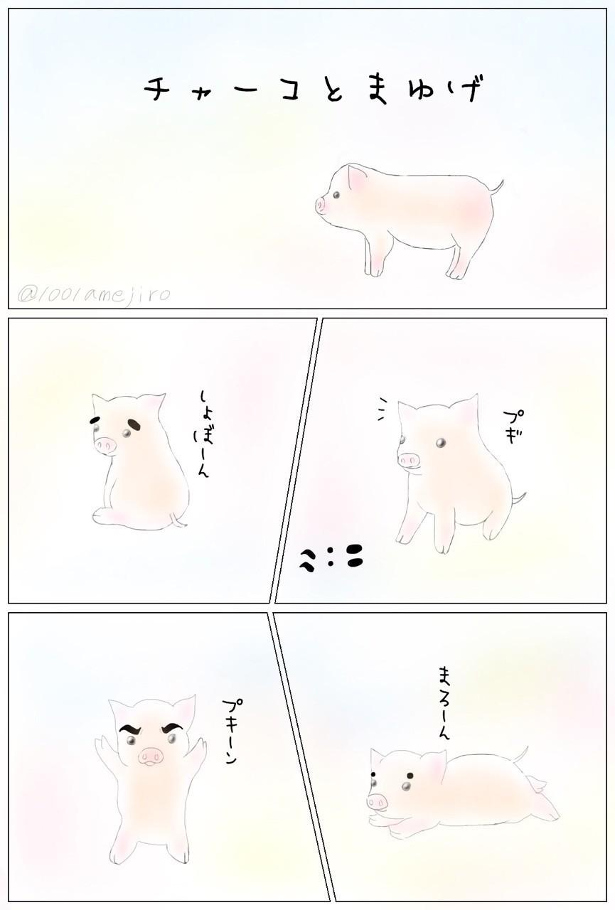 まゆげで印象が変わるプギ(*´ω`*) #マンガ