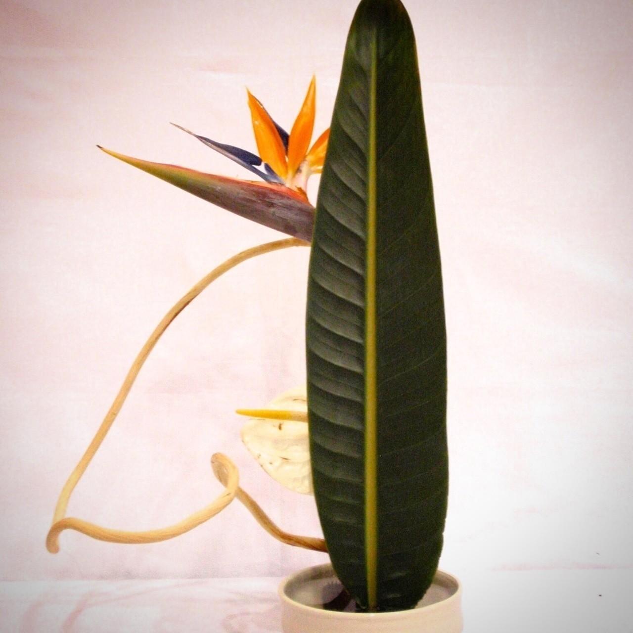 アンスリウム、ストレリチア、漂白ゲンコツ  ストレリチアの葉の後ろから、ひょっこり顔を出している子供達…のようなイメージ。  #ikebana #kado #japan #japanese #flower #plant #arrengement #art #design #sogetsu #florist #flowerstagram #artwork #culture #華道 #いけばな #生け花 #草月 #草月流 #花 #植物 #アート #デザイン #いけばな男子#花のある暮らし