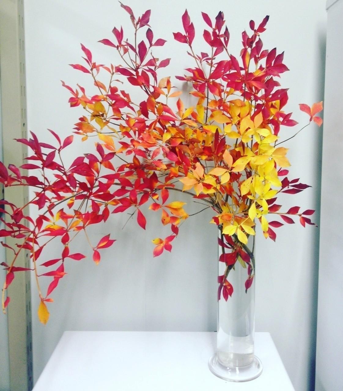 ドウダンツツジの1種生け。 葉の紅葉は、命が最後に燃え上がるような輝きを感じる。  #ikebana #kado #japan #japanese #flower #plant #arrengement #art #design #sogetsu #florist #flowerstagram #artwork #culture #華道 #いけばな #生け花 #草月 #草月流 #花 #植物 #アート #デザイン #いけばな男子#花のある暮らし