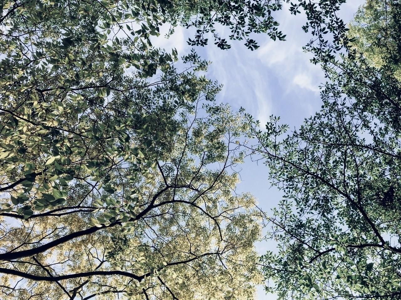 空を見上げる。五月の澄んだ空と新緑が眩しい。