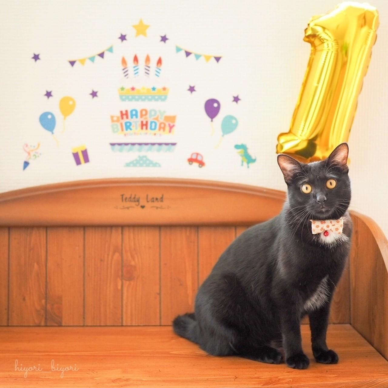 7月14日、月ちゃん1歳の推定誕生日。