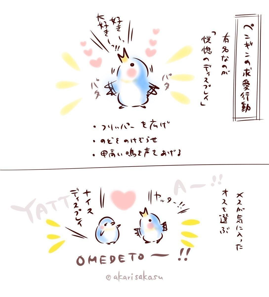 ペンギンの求愛行動1