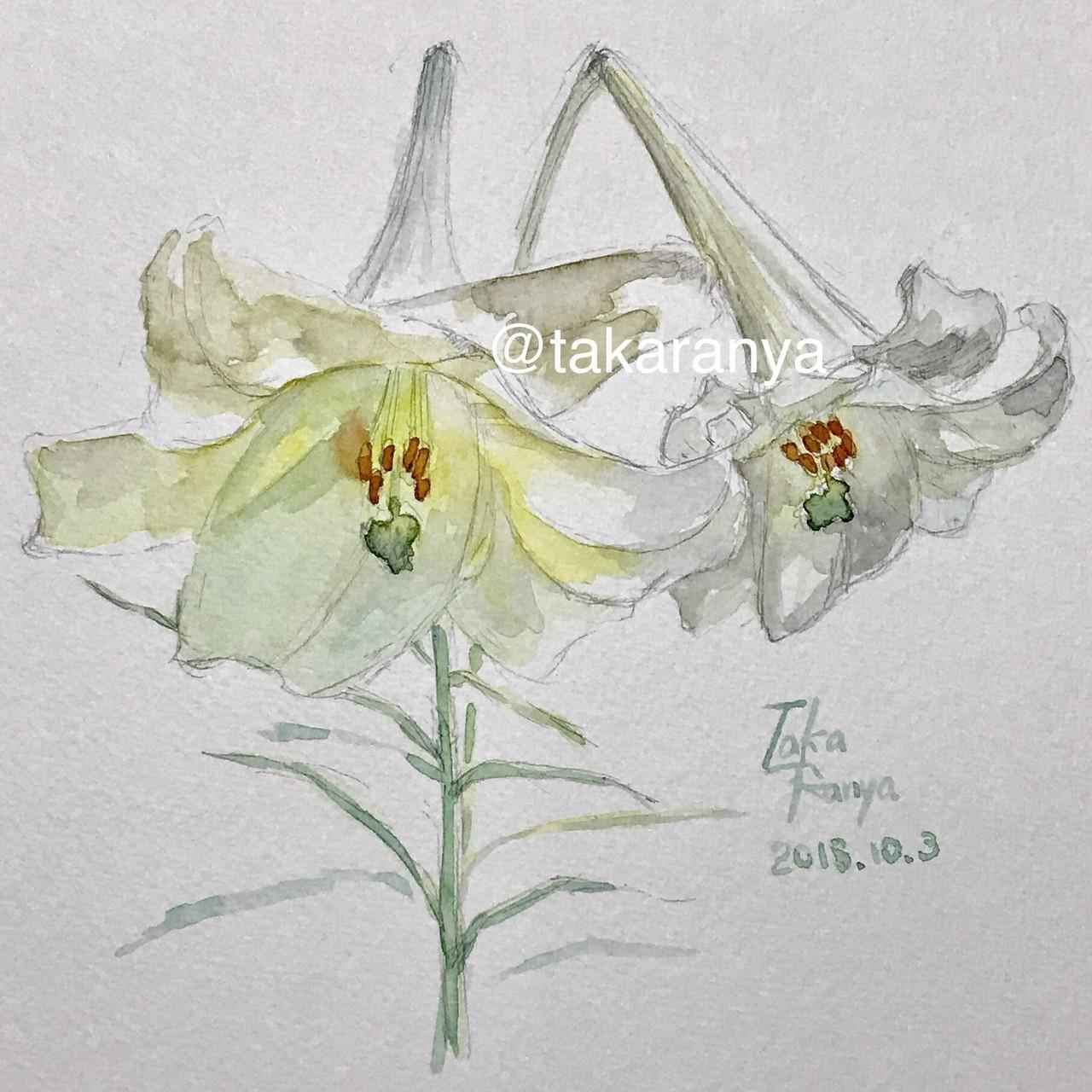 ユリの花お花のインクトーバーno4たからにゃイラストnote