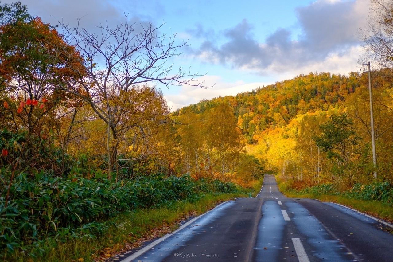 通り抜けない道の先の秋