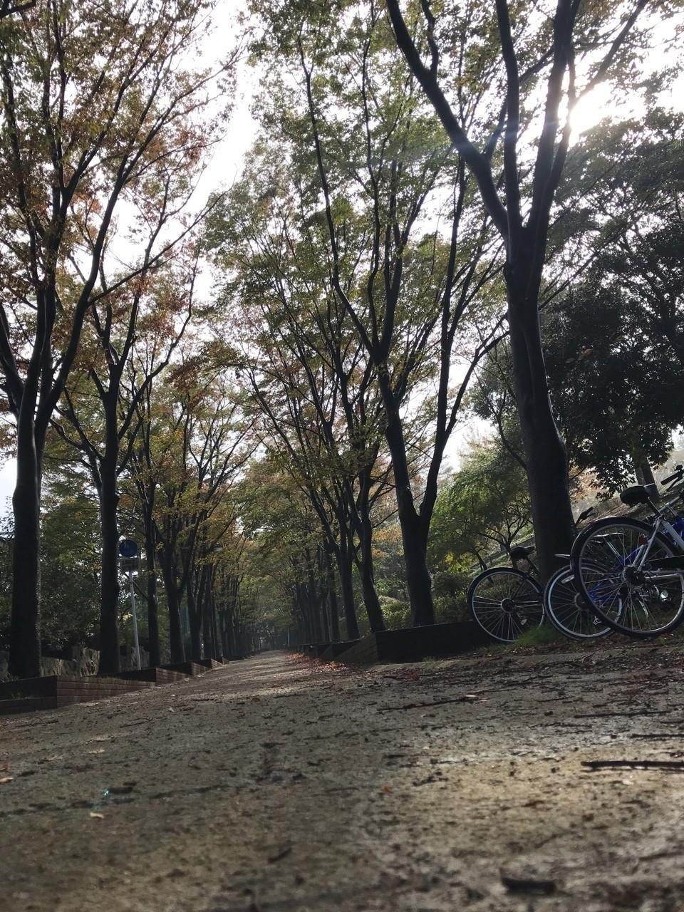 雨上がりの木漏れ日。