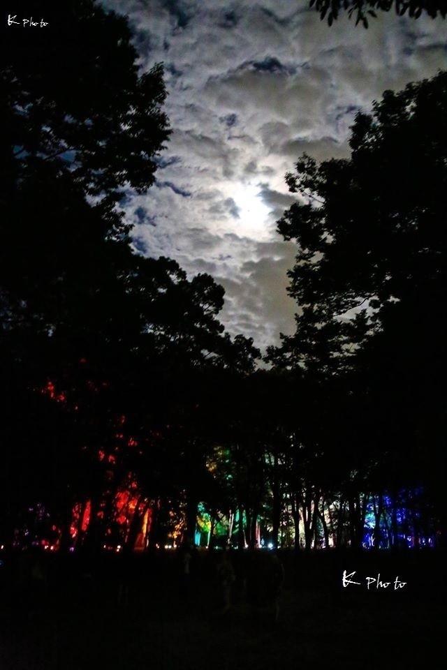 外から見るとまるで影絵。『もちもちの木』という絵本を思い出した夜