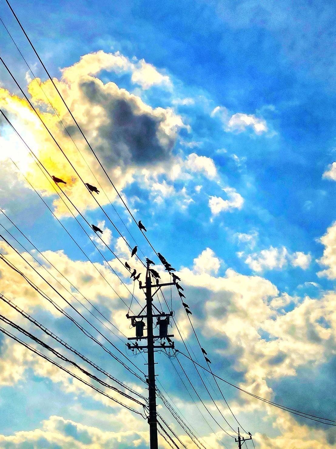 電線にとまるカラスを撮っただけなのに……。少し神々しい写真が撮れた……未完。